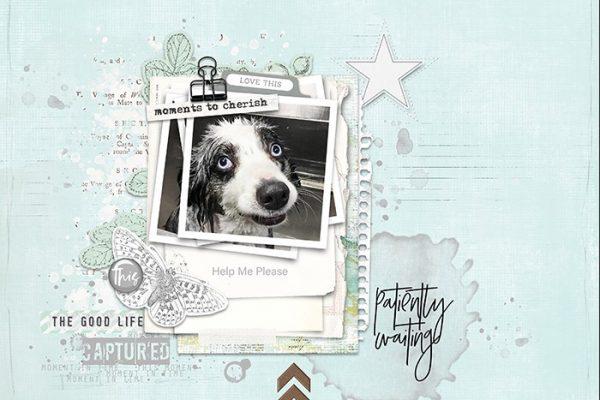 Scraplift: Stamps Inspiration
