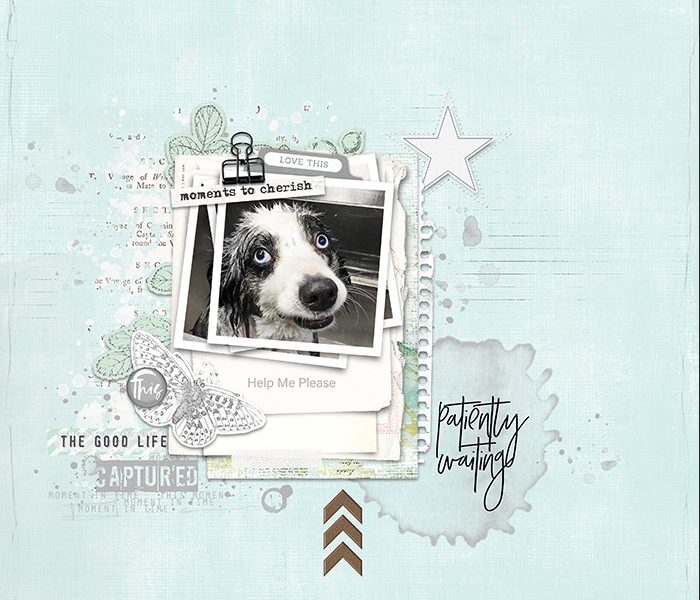 Scraplift: Stamps Inspiration